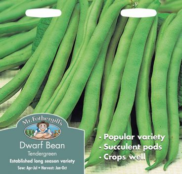 SEEDS – DWARF BEAN – TENDERGREEN