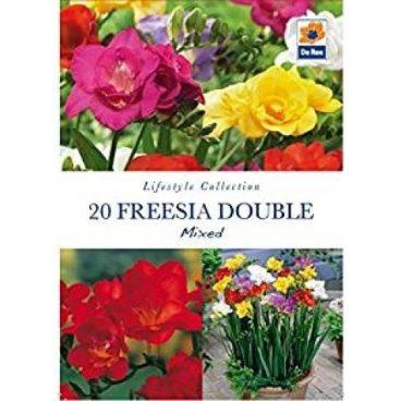 Flower Bulb – Freesia Double -20pk