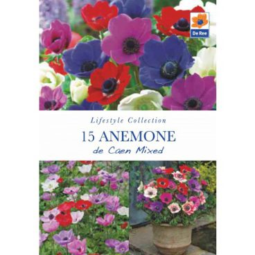 Flower Bulbs – Anemone De Caen Mix – 15pk