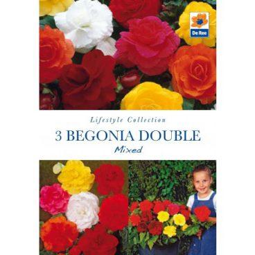 Flower Bulbs – Begonia Double Mix – 3pk