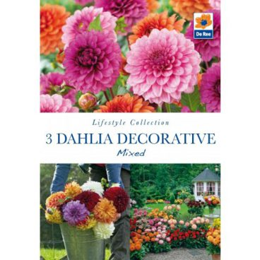 Flower Bulbs – Dahlia Decorative Mix – 3pk