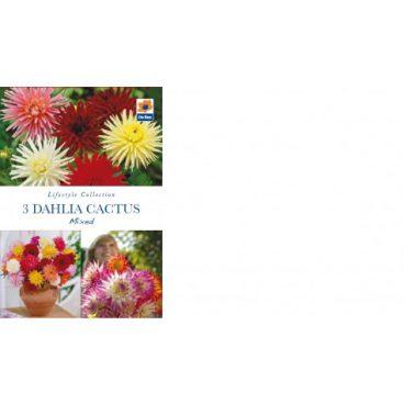 Flower Bulb – Dahlia Cactus Mix – 3pk